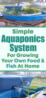 Amazing Simple Aquaponics System For Growing Your Own Food & Fish At Home