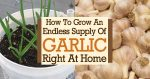 How To Grow An Endless Supply Of Garlic Right At Home