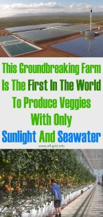This Groundbreaking Farm Is The First One In The World To Produce Veggies With Only Sunlight And Seawater